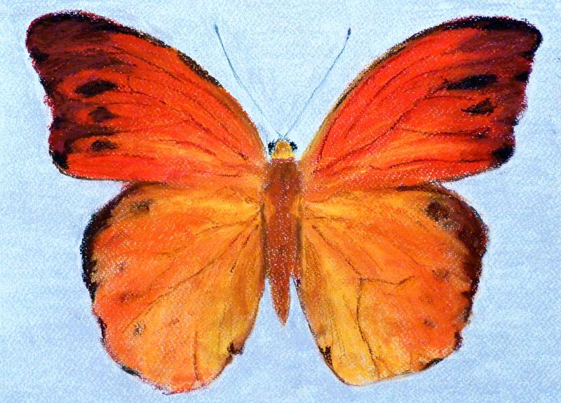 Pasztell tanfolyam 1.szint állat pillangó festés porpasztell