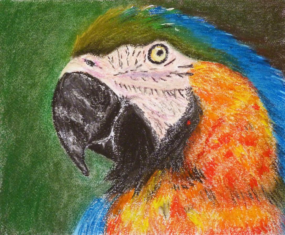 Pasztell tanfolyam 1.szint állat farkas festés porpasztell