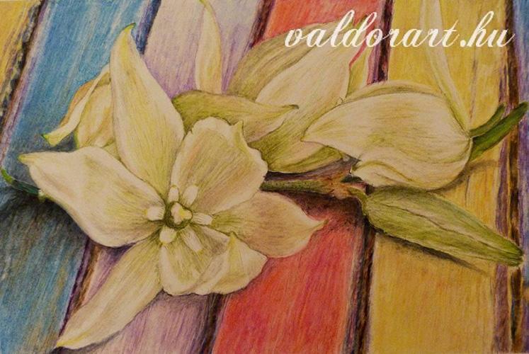 Akvarell ceruzával készült virág